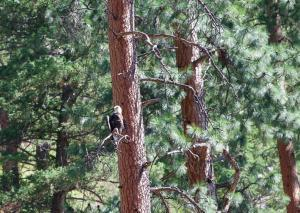Idaho Middle Fork Wildlife